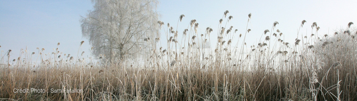 Nuvi laboratoires hivers